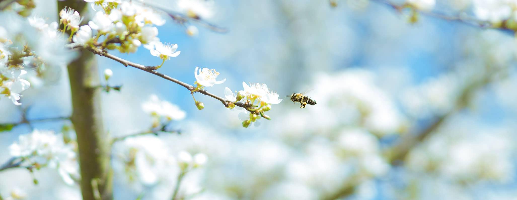 Bienen, Karsten Wurth | Weingut Schwarz, Heilbronn